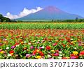 风景 景观 景色 37071736
