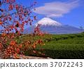 富士山 岩本山 秋天 37072243