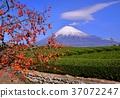 富士山 岩本山 秋天 37072247