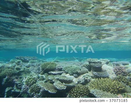 under water 37073185