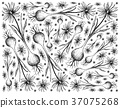 Hand Drawn of Camas on White Background 37075268