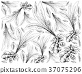Hand Drawn of Turmeric Plant on White Background 37075296