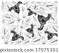 Water Caltrop Plant on White Background 37075301