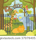 Wild animals in zoo park. Giraffe, elephant 37076405