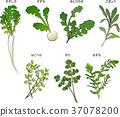 나나쿠사, 칠초, 식물 37078200