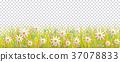 花朵 花 花卉 37078833