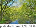 ฤดูใบไม้ผลิ,ป่า,พืชสีเขียว 37082836