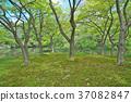 봄, 삼림, 숲 37082847