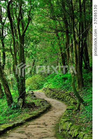 自然景色,森林,樹,休閒,步道,路,臺灣,宜蘭,明池,明池森林遊樂區,清新,綠色 37086530