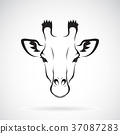 Vector of a giraffe head design. Wild Animal. 37087283
