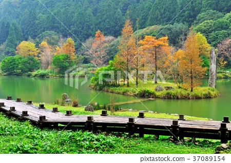 가을, 숲, 다리, 도보, 나무, 물, 호수, 가을, 대만, yilan, mingchi, mingchi forest play area, 신선한, 녹색, 자연 37089154