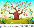 Happy tree in the countryside 37089690