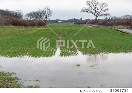 Farmers flooded field 37091752