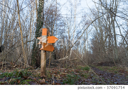 Colorful wooden arrows in a forest 37091754