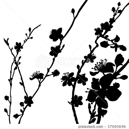 Silhouette Blossom Flowers Background Pattern 37093646