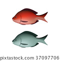 Fresh Silver and red fish in 3D vector 37097706