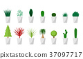 Set of Green plant in white pot for interior 37097717