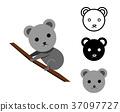 Koala bear in flat and icon, vector 37097727