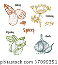 spice, vector, herb 37099351