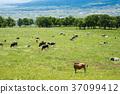 meadow, ranch, graze 37099412