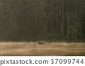 bamboo rafting through the mist on the lake 37099744