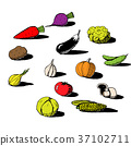 Set of handdrawn vegetables in sketch style 37102711