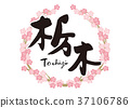 tochigi, calligraphy writing, cherry blossom 37106786