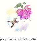 hummingbird, flower, floral 37108267