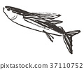 flying, fish, water 37110752