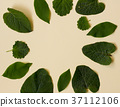 Collection of garden leaves isolated on creme 37112106