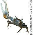 Mud Fiddler Crab 37117406