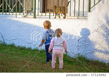 Little boy and girl twins run by the cat 37124092