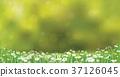 nature, green, summer 37126045
