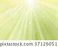background, spring, green 37126051