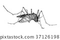 mosquito illustration mosquitoes 37126198