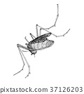 mosquito illustration mosquitoes 37126203