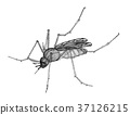 mosquito illustration mosquitoes 37126215