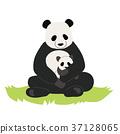 팬더의 부모 일러스트 37128065