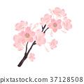 Cherry blossom branch watercolor illustration 37128508
