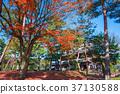 단풍, 교토, 가을 37130588