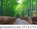 교토 부 무코시 대나무 지름 37131715