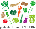 vegetables, vegetable, set 37131902