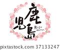 kagoshima, calligraphy writing, cherry blossom 37133247