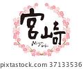 miyazaki, calligraphy writing, cherry blossom 37133536