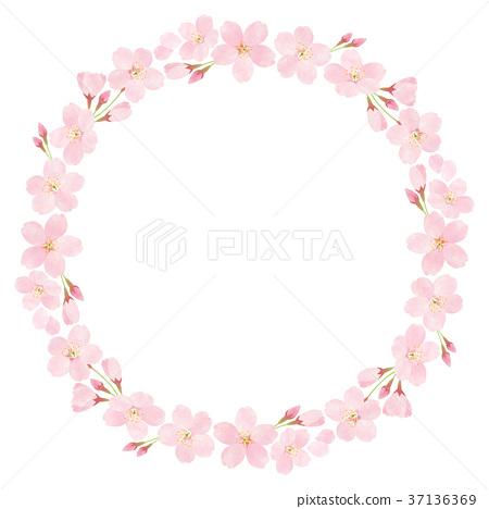 樱花 樱桃树 花朵 37136369
