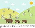 bear, bears, scape 37136722
