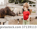 Toddler boy pointing his finger at pony horse 37139113
