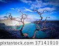 Kawah Ijen volcano with Dead trees on blue sky 37141910
