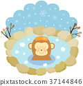 monkey, monkeys, hot spring 37144846