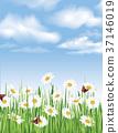 floral, flower, summer 37146019